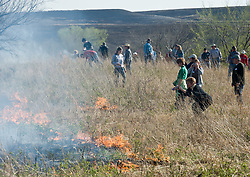 "Participants in ""Flames in the Fint Hills"" observe burning prairie at the Flying W Ranch near Clements, Kansas. This agritourism event allows ranch guests to take part in lighting the prescribed burns. Prairie grasses in the Kansas Flint Hills are intentionally burned by land mangers and cattle ranchers in the spring to prepare the land for cattle grazing and help maintain a healthy tallgrass prairie ecosystem. The burning is also an effective way of controlling invasive plants and trees. The prairie grassland is burned when the soil is moist but grasses are dry. This allows the deep roots of the grasses to survive and the burned grasses on the soil surface return as nutrients to the soil. These nutrients allow for the rapid growth of new grass. After approximately two weeks of burning, new grass emerges. Less than four percent of the original 140 million acres of tallgrass prairie remains in North America. Most of the remaining tallgrass prairie is in the Flint Hills in Kansas."