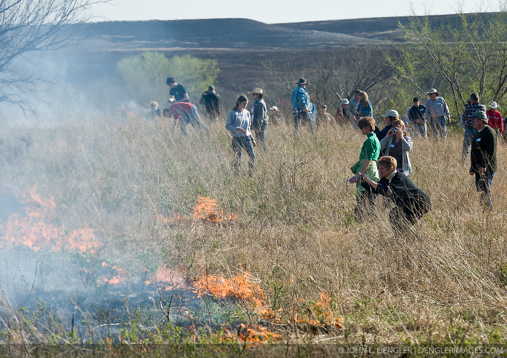 """Participants in """"Flames in the Fint Hills"""" observe burning prairie at the Flying W Ranch near Clements, Kansas. This agritourism event allows ranch guests to take part in lighting the prescribed burns. Prairie grasses in the Kansas Flint Hills are intentionally burned by land mangers and cattle ranchers in the spring to prepare the land for cattle grazing and help maintain a healthy tallgrass prairie ecosystem. The burning is also an effective way of controlling invasive plants and trees. The prairie grassland is burned when the soil is moist but grasses are dry. This allows the deep roots of the grasses to survive and the burned grasses on the soil surface return as nutrients to the soil. These nutrients allow for the rapid growth of new grass. After approximately two weeks of burning, new grass emerges. Less than four percent of the original 140 million acres of tallgrass prairie remains in North America. Most of the remaining tallgrass prairie is in the Flint Hills in Kansas."""