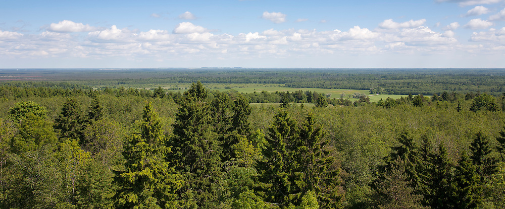 View from Emumägi Watchtower, Lääne-Viru County, Estonia, Europe.
