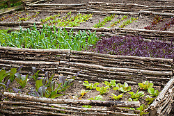 Raised beds with woven hazel hurdles in the vegetable garden