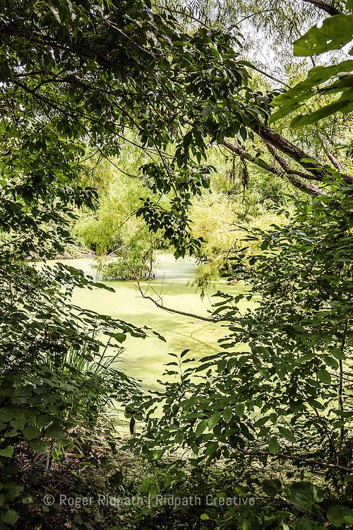 mossy pond Cave Spring Interpretive Center