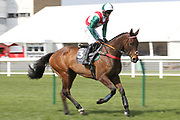 THEATRE LEGEND (3) ridden by Sean Quinlan and trained by Chris Grant canters to post before winning The Remus Uomo Handicap Hurdle Race over 2m (£16,800) during the Scottish Grand National, Ladies day at Ayr Racecourse, Ayr, Scotland on 12 April 2019.