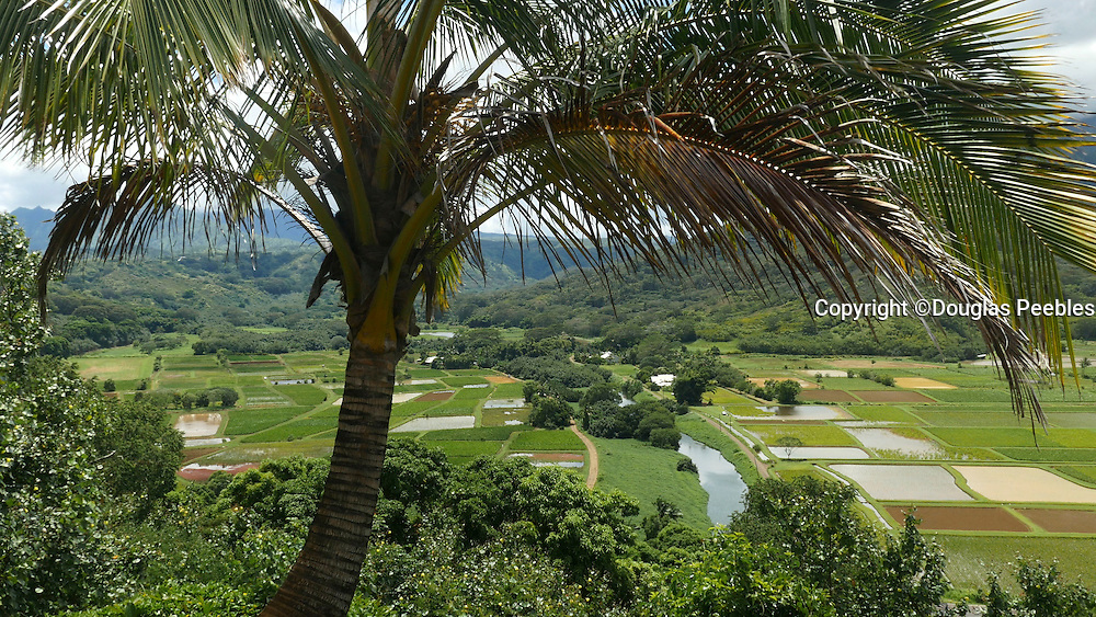 Hanalei Valley Lookout, Taro fields, Kauai, Hawaii