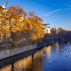 """""""Gaivotas em Paisagem Urbana (Paisagem) fotografado na Alemanha, na Unição Européia - Europa. Registro feito em 2016.<br /> ⠀<br /> <br /> ENGLISH: Gulls in Urban landscape photographed in Germany, in European Union - Europe. Picture made in 2016."""""""
