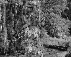 254 Bayou Country ©1997 JD Marston