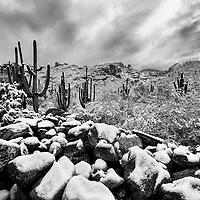 Heavy snow fall in Arizona Desert...
