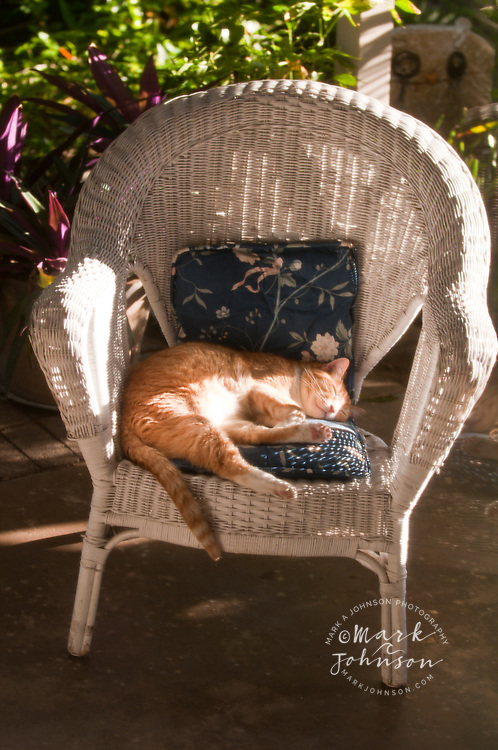 Cat napping on rattan chair, Hawaii