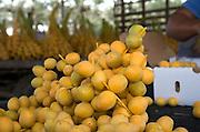 Packing Barhee (or Barhi) dates after picking. Photographed in Israel, Jordan Valley, Kibbutz Ashdot Yaacov