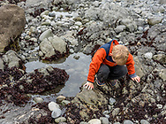 A young blond boy leans over a tidepool looking closely at the creatures to be found there. Model released.