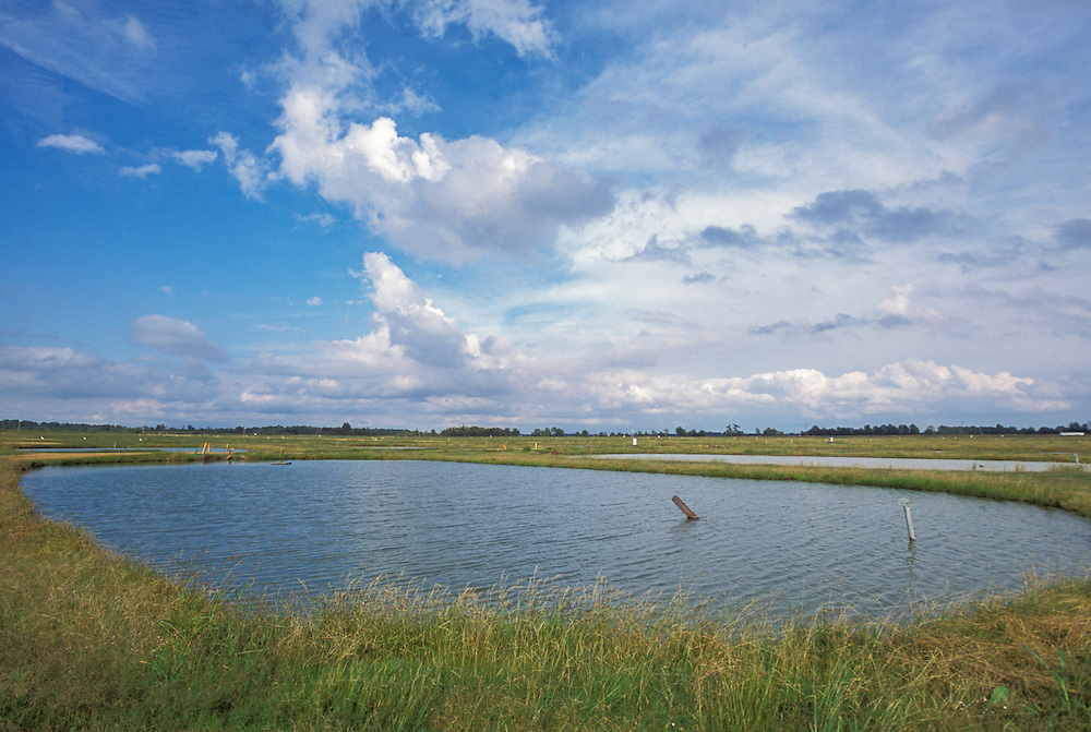 MISSISSIPPI, USA - Catfish ponds at the National Warmwater Aquaculture Center