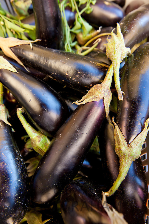 Freshly-picked aubergines, melanzane eggplants, on sale in food market in Pienza, Tuscany, Italy