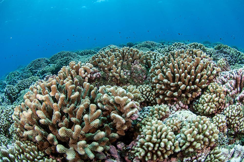 Shallow coral reef in Tiputa Pass, Rangiroa, French Polynesia