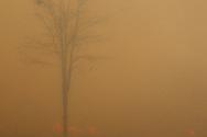 Brasilia, Brasil, 24/09/2011: Fire destroys the cerrado (Brazilian midwest forest) in Brazil's capital.   (Photo: Caio Guatelli)