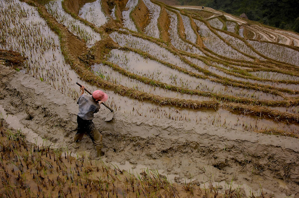 Rice terraces near Mengpin in Yuanyang county of Yunnan Province, China.  Farmers harvest the rice, the clean up the terraces, scraping the grass and weed from the terraces and repairing the raised banks that hold the water in, preparing the fields for the next crop.