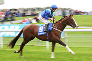 AQUARIUM (9) ridden by Franny Norton and trained by Mark Johnston on his way to the Start before winning The Download The Coral App Handicap Stakes over 1m 2f (£35,000)  during the October Finale meeting at York Racecourse, York, United Kingdom on 13 October 2018. Pic Mick Atkins