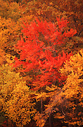 Autumn, fall foliage, rich color, Allegheny National Forest, PA