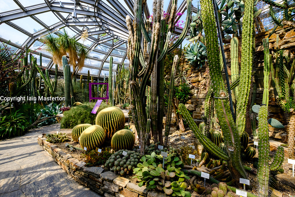 Cactus display in greenhouse at Berlin Botanical Garden in Dahlem, Berlin, Germany