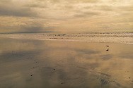 A wet sandy beach reflects a warm, lightly overcast sky and a passing shorebird.