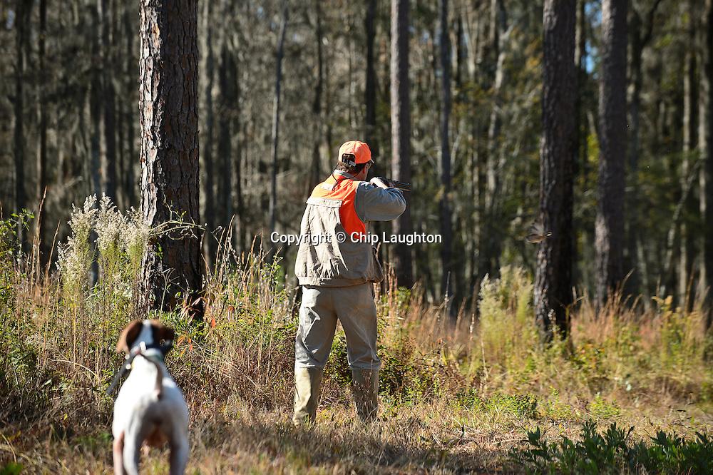 quail hunting stock image