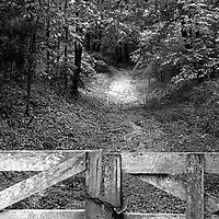 Writer William Faulkner's walking path near his home of Rowan Oak in Oxford, MS.