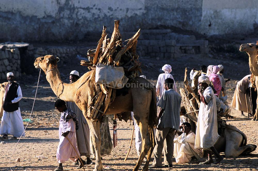 Le marché aux chameaux se tient tous les lundi matin dans la petite ville de Keren, sur les hauts plateaux érythréens...Le marché aux chameaux se tient tous les lundi matin dans la petite ville de Keren, sur les hauts plateaux érythréens.