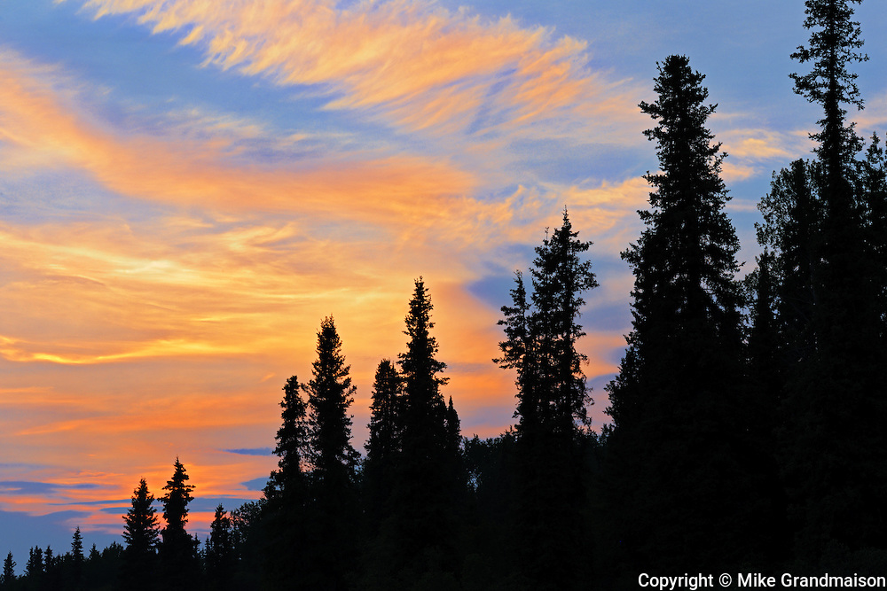 Trees at sunset on the Stewart-Cassiar Highway<br /> Iskut<br /> British Columbia<br /> Canada