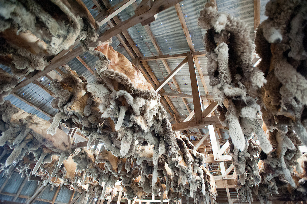 Sheep skins drying in barn and estancia in Rio Verde Chile