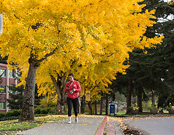 Fall color at PLU, Tuesday, Oct. 25, 2016. (Photo: John Froschauer/PLU)