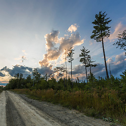 A logging road in the Reed Plantation in Reed, Maine.