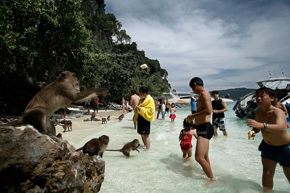 Thailandia , Phi Phi Island ,  feeding monkeys on Monkey Island