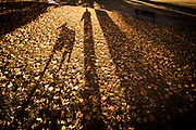 A man and his dog cast a shadow across fall leaves in the park.