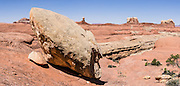 Traverse a sandstone bench along Peek-a-Boo Trail with good views of Needles District of Canyonlands National Park, Utah, USA. The Permian rocks of the Needles District formed where red alluvial fans from the east interwove with white dunes from the west, making sandstone spires striped red and white. This panorama was stitched from 2 overlapping photos.