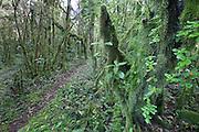 Utuana Reserve; Ecuador, Prov. Loja
