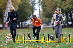 © Licensed to London News Pictures. 29/10/2015. London, UK. Conservatives MPs Caroline Dinenage, Rebecca Pow and Andrea Jenkyns taking part at Westminster Dog of the Year competition in Victoria Tower Gardens in London on Thursday, 29 October 2015. Photo credit: Tolga Akmen/LNP
