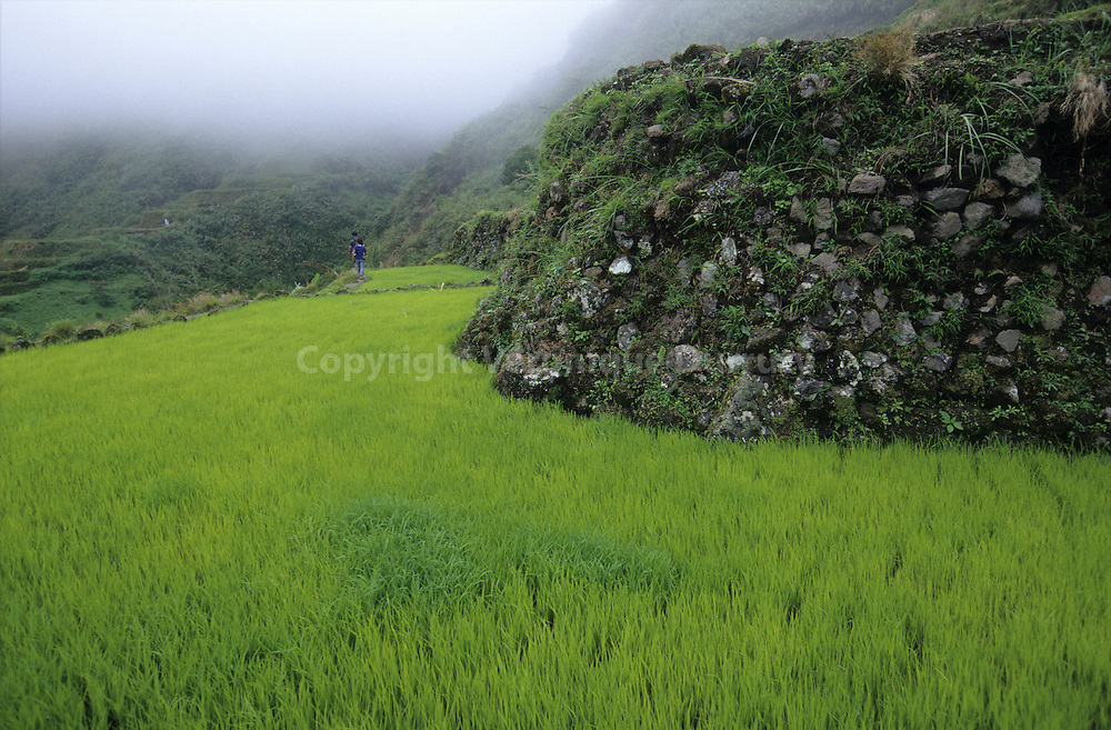 IFUGAO RICE FIELDS, LUZON ISLAND, THE PHILIPPINES