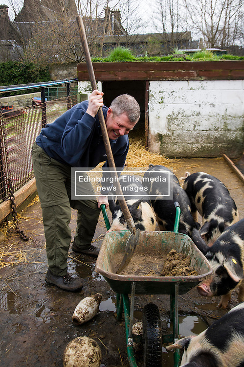 Pictured: Willie Rennie could not control the young boars in the Berkshire and Gloucestershire Old Spots pen as he mucked them out. <br /> Scottish Liberal Democrat leader Willie Rennie called for a boost to vocational training opportunities when he met volunteers, Leah Muirhead and Graham Mathieson, at Gorgie City Farm in Edinburgh. After touring the farm, which provides volunteering and training opportunities for at-risk young people and adults with additional support needs, Mr Rennie set out Lib Dem plans to increase opportunities for industry-recognised vocational qualifications.  <br /> Ger Harley   EEm 8 April 2016