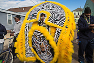 2/17/15, New Orleans, LA, Mardi Gras Day,  The Fi-Yi-Yi  Mardi Gras Gras Indian Tribe lead their own Mardi Gras Parade in the 7th Ward.