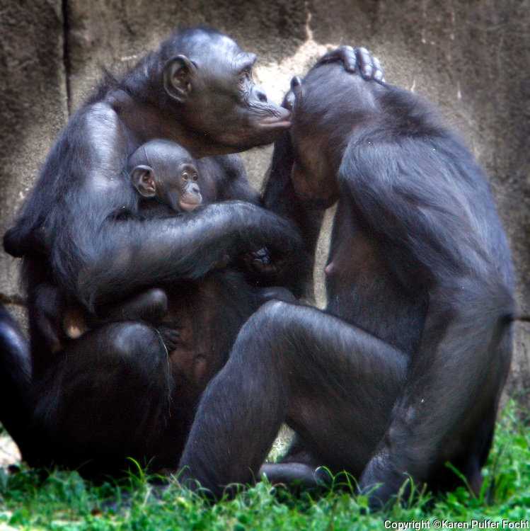 Banobo Family, The Memphis Zoo.