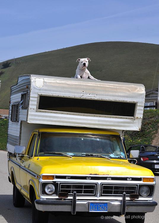 California Central Coast Pickup & Dog