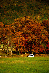 TN: Tennessee Great Smoky Mountains National Park, Mtns, Cades Cove, Fall color          .Photo Copyright: Lee Foster, lee@fostertravel.com, www.fostertravel.com, (510) 549-2202.Image: tnsmok220