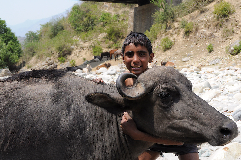 """Sharafat told me he doesn't understand why people keep dogs as pets:""""Buffaloes are smarter, more loyal and more affectionate."""""""