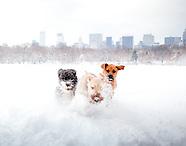 NYC Winter Wonderland