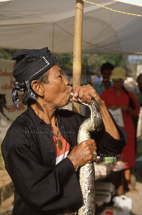 Indonesia, Java island : the Dukun (healer)Pak Iwo takes his &quot;power&quot; from the snake.<br /> Indonesia, Giava: il dukun (guaritore) Pak Iwo trae la sua forza dai serpenti.