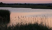 Dusk light on wetland and marsh habitat at Old Hall Marshes RSPB Reserve, Essex, United Kingdom