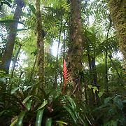 La fore?t Atlantique permet la cultures de nombreuse plantes comme les brome?liace?es///The Atlantique forest allows the cultures of many plants like brome?liace?es