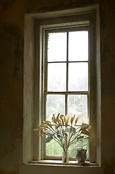 dried white flowers on a window sill in New Mexico