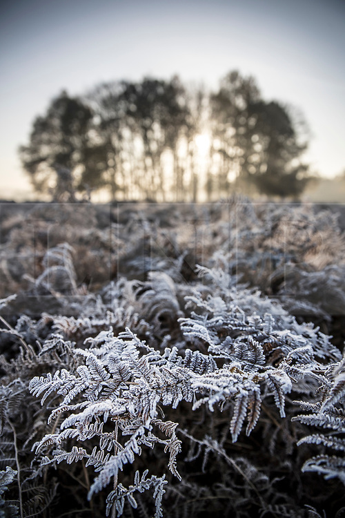 © Licensed to London News Pictures. 06/11/2017. London, UK.  Frost coats the bracken in Richmond Park at first light. Parts of the UK are experiencing freezing temperatures today. Photo credit: Peter Macdiarmid/LNP