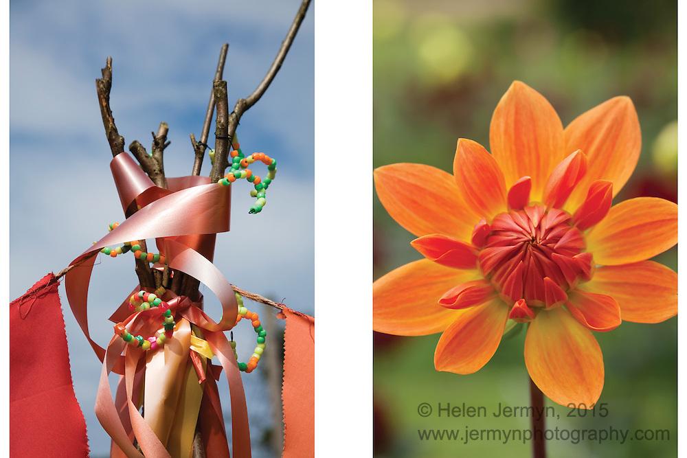Thrive garden, Trunkwell, & Withypitts Dahlia Farm