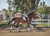 DT CC Photo 7 Trot Canter Transition