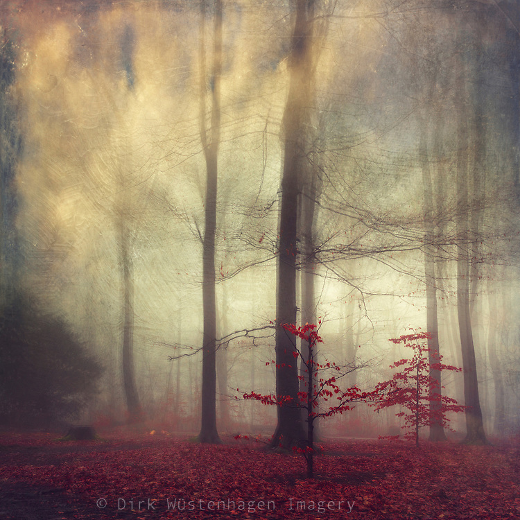 Moody misty forest - digitally manipulated photograph<br />